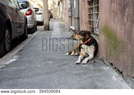 Portrait Of A Dog On Street. Old Dog On Street. Close Up Of Dog. Old Mixed-breed Dog. Cute Dog Portr