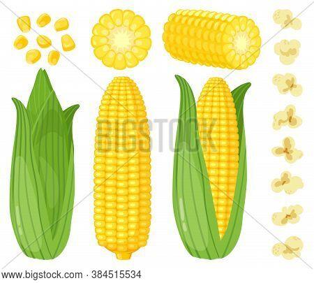 Cartoon Corn. Maize Vegetables, Golden Sweet Corn Cob, Popcorn And Corn Grains, Rich Agriculture Har