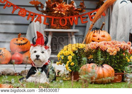 Funny Dog West Highland White Terrier Dressed In Cloak And Horns Costume Is Sitting Near Decorated W