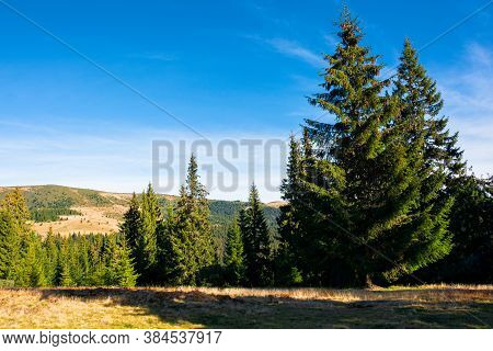 Apuseni Natural Park In Fall Season. Mountainous Landscape Of Romania. Spruce Trees On Grassy Hills.