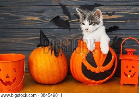 Happy Halloween! Cute Kitten Sitting In Jack O Lantern Candy Bucket On Background Of Pumpkin With Ba