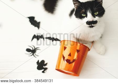 Cat With Serious Emotion Relaxing At Jack O Lantern Candy Pail On White Background With Bats And Spi
