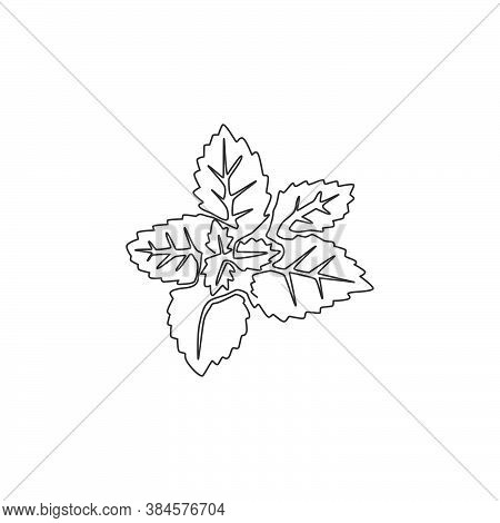 Single Continuous Line Drawing Of Healthy Organic Mint Leaves For Farm Logo Identity. Fresh Mentha P