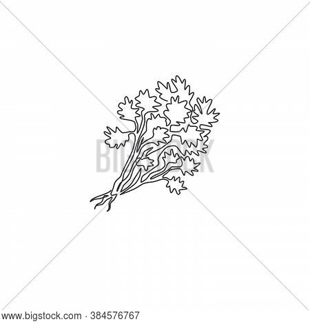 Single Continuous Line Drawing Of Tied Bunch Healthy Organic Coriander Leaf For Logo Identity. Fresh