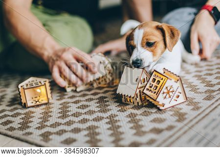 Adorable Puppy Jack Russell Terrier On The Capet Playing With Toys.  Portrait Of A Little Dog.