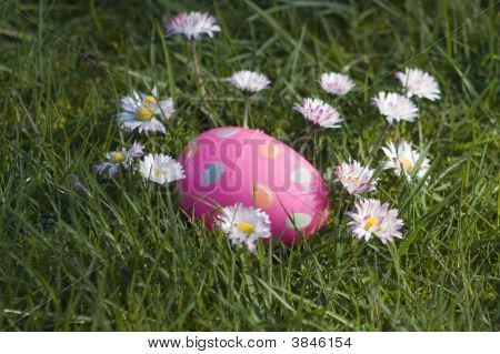 Pink Easter Egg In Daisies