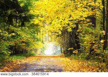 Beautiful Fall Landscape. Rural Road. Autumn Leaf Fall. Yellow Leaves In Trees. Fallen  Yellow Leave