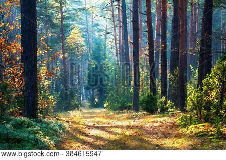 October Landscape. Late Fall. Woods Road. Fallen  Yellow Leaves On Road.  Sunny Day In Autumn Woods.