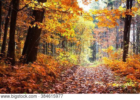 Landscape Of Fall Woodland. Late Autumn. Fallen Yellow Leave On Woods Path. Dark Trunks Of Trees.