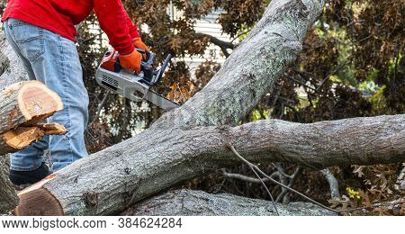A Man With A Chainsaw Standing In The Middle Of Many Parts Of A Tree That Fell During A Storm Is Wor