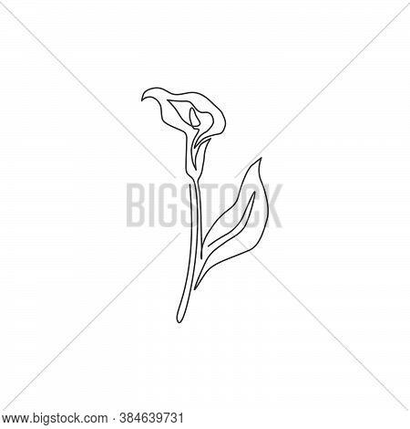 Single Continuous Line Drawing Of Beauty Fresh Zantedeschia For Home Wall Decor Print. Printable Dec