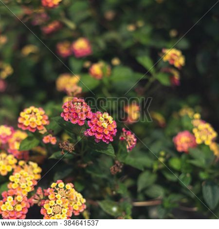 flowers background with shallow depth of field