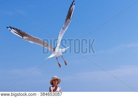 Genicheskaya Gorka, Kherson Region, Ukraine August 21 2020: One Seagull In Flight Against The Blue S