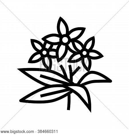 Neroli Flowers Aromatherapy Line Icon Vector. Neroli Flowers Aromatherapy Sign. Isolated Contour Sym