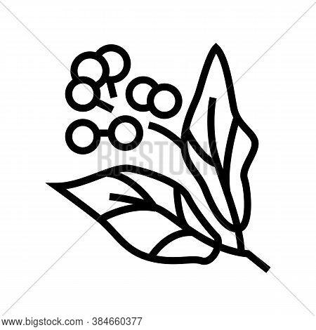 Camphor Aromatherapy Line Icon Vector. Camphor Aromatherapy Sign. Isolated Contour Symbol Black Illu
