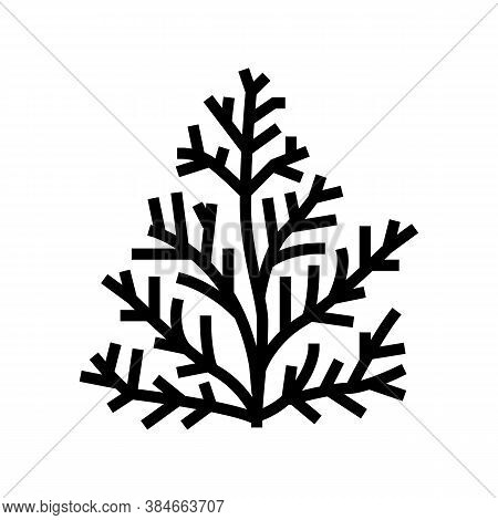Cedar Plant Aromatherapy Glyph Icon Vector. Cedar Plant Aromatherapy Sign. Isolated Contour Symbol B