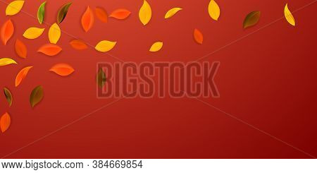 Falling Autumn Leaves. Red, Yellow, Green, Brown Neat Leaves Flying. Falling Rain Colorful Foliage O