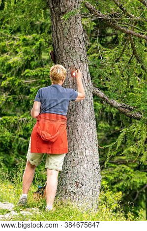 Blonde Woman From Behind Painting Red And White Circle Tourist Mark On Big Coniferous Tree In Karava