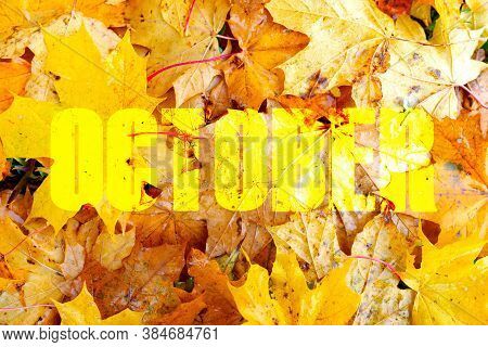 Autumn Yelow Leafs On Tree.white Bright  Background.