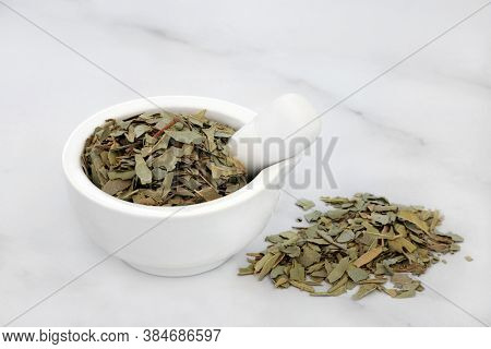 Boldo herb leaves in a mortar & pestle used in natural herbal medicine for gallstones, rheumatism, bladder infections, gonorrhoea, liver disease, is anti bacterial & can reduce anxiety.  Peumus boldo.