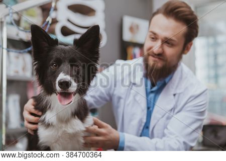 Adorable Happy Dog Looking To The Camera With Its Tongue Out, Cheerful Vet Smiling At His Furry Pati