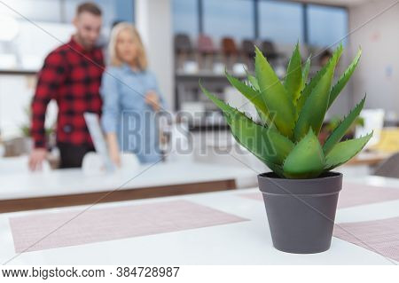 Selective Focus On Aloe In A Pot, Young Couple Shopping For Furniture On Background. Customers Choos