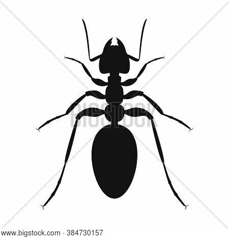 Ant Vector Logo. Insect Icon Isolated. Black Silhouette Of Ant. Vector Illustration. Ant Icon In Fla