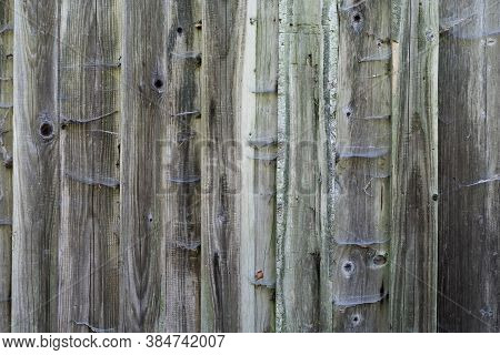Spider Webs On Exterior Spruce Timber Cladding Facade, Rough Timber Texture, Wood Cladding, Old Wood