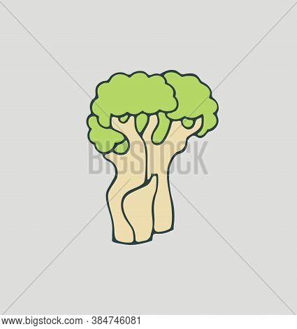 Baobab Tree. Isolated Vector Illustration. African Flora. Medicinal Plant.