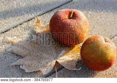 The First Frosts In Late Autumn. The Apples Were Covered With Frost.