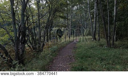 Path In The Evening Forest In The Evening. Horizontal Frame