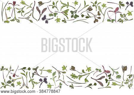 Vector Frame With Microgreen. Herbs - Carrots, Chicory, Purslane, Radishes, Beets, Shungiku, Cabbage