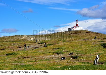 Lighthouse On Magdalena Island And Colony Of Magellanic Penguin In Chile.