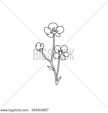 Single One Line Drawing Of Beauty Fresh Ranunculus For Garden Logo. Printable Decorative Buttercup F