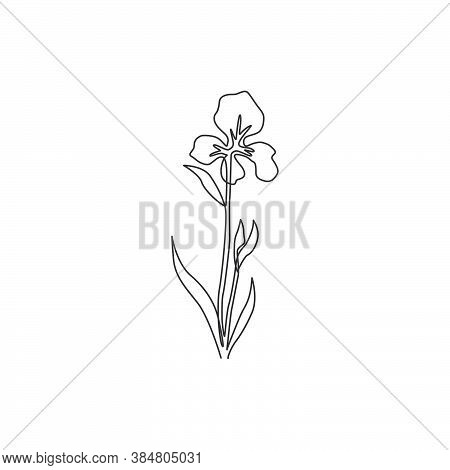 One Continuous Line Drawing Beauty Fresh Perennial Plants For Wall Decor Home Art Poster Print. Deco