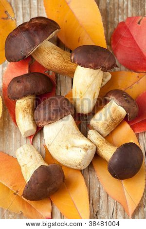 Woods Mushrooms And Yellow Autumn Leaves On The  Wooden  Background