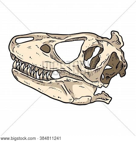 Trex Fossilized Skull Hand Drawn Comic Style Image. Carnivorous Reptile Dinosaur Fossil Illustration