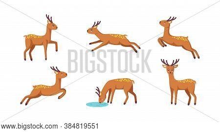 Set Of Cheerful Reindeers. Jumping, Standing, Running, Drinking Reindeer In Cute Cartoon Style. Isol