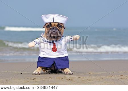 Funny French Bulldog Dressed Up With A Cute Sailor Dog Halloween Costume On Beach With Ocean In Back