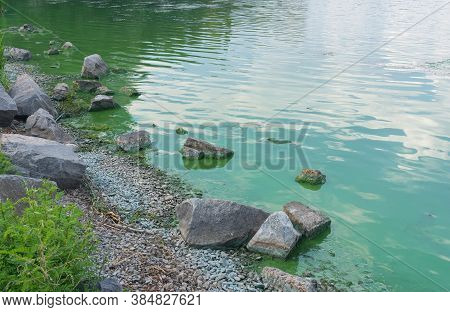 Rocky Dnipro Riverside In Center Of The Same Name City Covered With Green Slush Of Cyanobacterias As