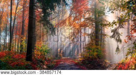 Magical Autumn Scenery In A Dreamy Forest, With Rays Of Sunlight Beautifully Illuminating The Wafts
