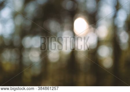 Defocused Shiny Forest Abstract Background. Glowing Sunshine Nature Backdrop