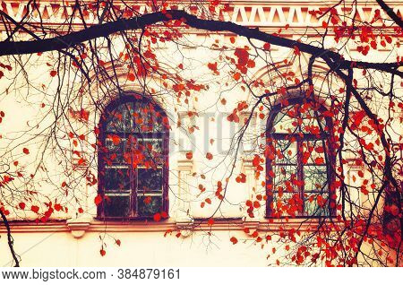 Fall background. Fall tree branches with red fall leaves on the background of the old windows. Fall old town scene, fall architecture background