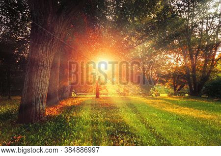 Fall landscape - forest fall trees with grass on the foreground and sunlight shining through the fall trees, colorful fall park nature. Fall sunset park view, fall park landscape. Fall natural background