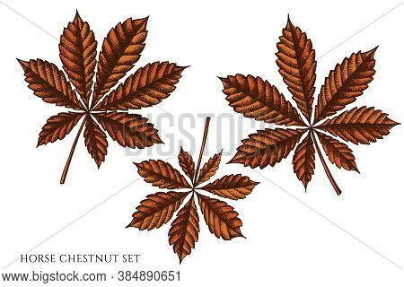 Vector Set Of Hand Drawn Colored Horse Chestnut Stock Illustration