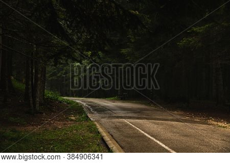 The Road Going Into The Distance In The Middle Of Tall Pines, Nature After The Rain, Durmitor In Mon