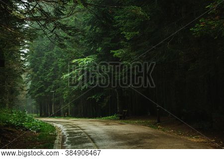 Empty Wet Road In The Forest Among Tall Pines, Nature After Rain, Durmitor In Montenegro, Travel Acr