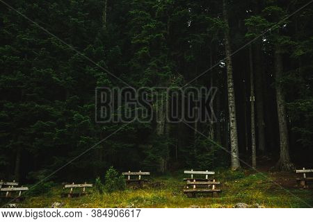 Lonely Wooden Bench Against The Backdrop Of Huge Pine Forests