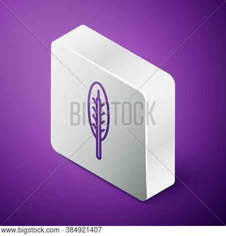 Isometric Line Indian Feather Icon Isolated On Purple Background. Native American Ethnic Symbol Feat