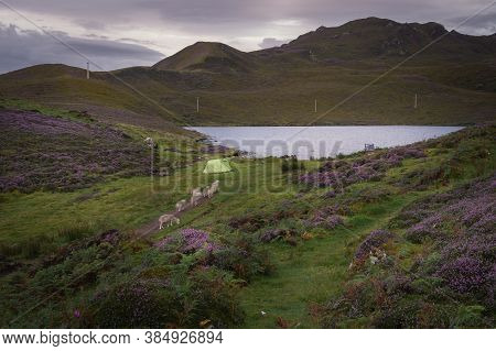 Early Morning At Loch Langaig On The Isle Of Skye, Scotland. Wild Camping In Nature And Sheep Passin